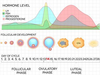 Image Courtesy of RoseWellness.com
